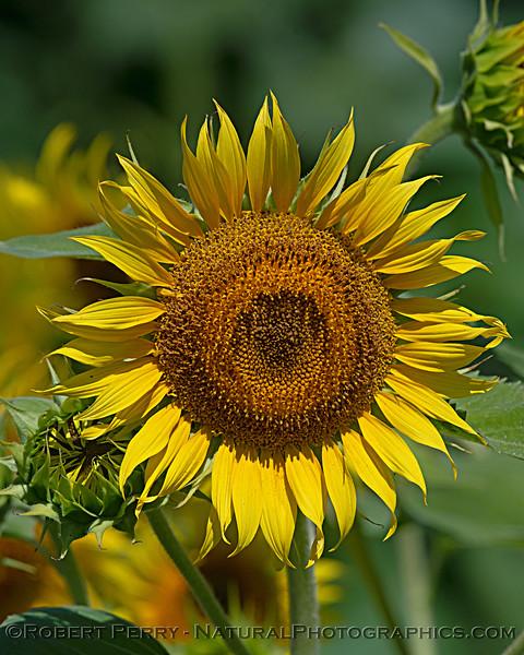 Female flower