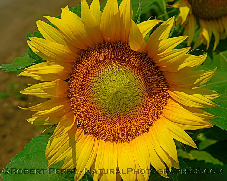 Female flower - close up
