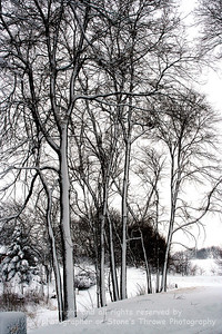 029-trees_winter-fontanelle-xxfeb07-2339