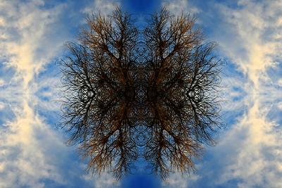 Nature's Labyrinth