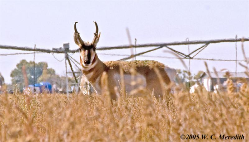 AntelopeWyoming