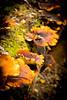 Brown fungi_4011-1