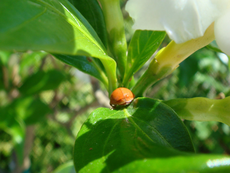 Yes, this is a Lady Bug that is about 4mm in diameter. Using the Macro2 mode, the camera is about 25mm from the subject. Notice the specs of dirt on the leaf below.
