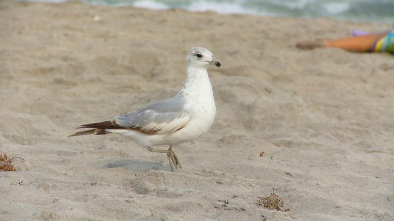 beach bird1e