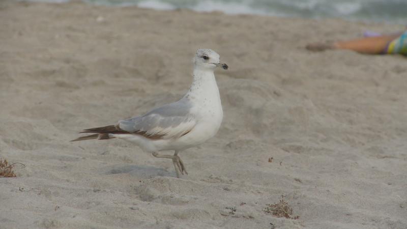 beach bird1