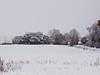 03 Dec 2010 - At -3C Plant Farm Waterlooville. Copyright Peter Drury 2010. Part of E5 Tests