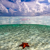 A starfish (Oreaster reticulatus) lies in about 4 feet of water in the Exuma Cays.