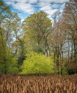 Squabb Wood