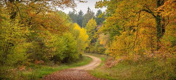 Ampfield Wood