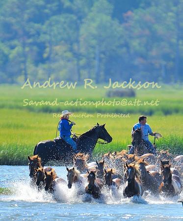 7-26-12 Chincoteague Pony Swim - Assateague Island- Eastern Shore