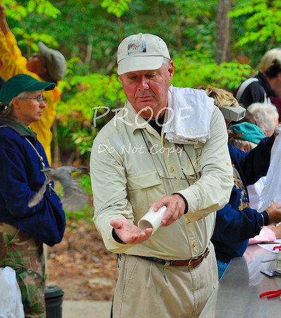 Bird & Raptor Banding at Kiptopeke - 10-1-11