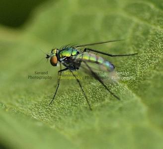 7-7-12 Bugs n Flowers