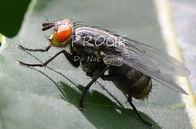 DSC_4596-fly