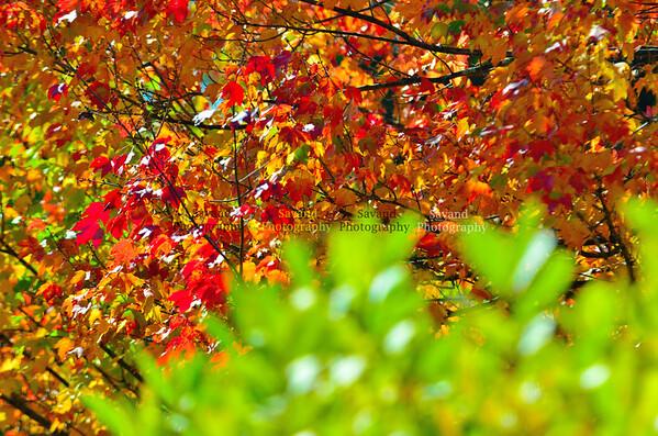 West Virginia Autumn 2011