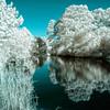 Assateague Island wetlands on Virginia's Eastern Shore - a false-color infrared image