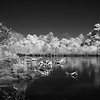 A black and white infrared image of an ESVNWR wetland on Virginia's Eastern Shore