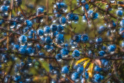 Sloes Topaz Studio 2 Abstraction 111.jpg