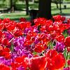 Flowers-sRGB