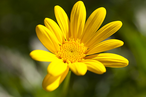 YellowFlower-sRGB