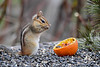 "<div class=""jaDesc""> <h4>Chipmunk Wiping Face - May 5, 2018 </h4> <p>This Chipmunk was wiping his face before snacking on the grape jelly in this orange half.</p> </div>"