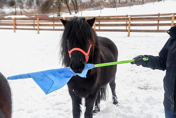 """<div class=""""jaDesc""""> <h4>Shadow Bites Flag Stick - February 6, 2018</h4> <p>When Melody held this rolled up flag in front of Shadow, he thought the appropriate response was to bite it.</p></div>"""