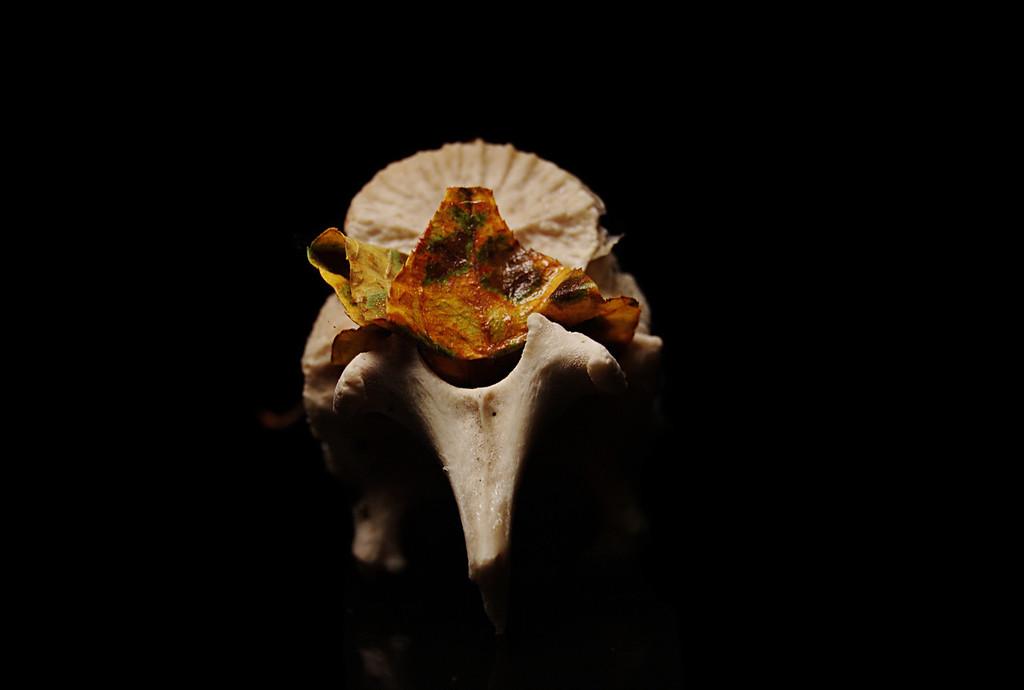 boned leaf