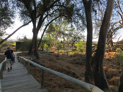 Boardwalk down to the main part of camp. The camp is not fenced and elephants, hippos, crocodiles, etc. can come into camp anytime. Stay on the boardwalk!!