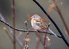 "<div class=""jaDesc""> <h4> Field Sparrow Staying Warm - April 11, 2018</h4> <p>When the Field Sparrow started feeling a bit chilly, he shifted to a short chubby posture to conserve body warmth.</p> </div>"