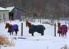 "<div class=""jaDesc""> <h4> Horses Hanging Out in the Paddock - December 31, 2017 </h4> This is a typical calm day in the snow.  Waiting for breakfast to be served. </div>"