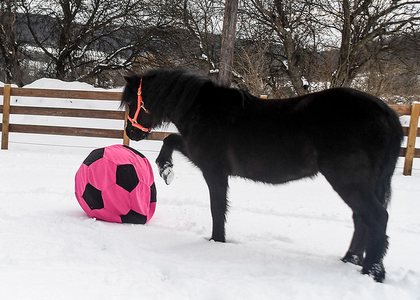 """<div class=""""jaDesc""""> <h4>Shadow Pawing at Ball - February 6, 2018</h4> <p>Shadow started pawing at the ball to see what it would do.  He then started pushing it forward through the snow.</p></div>"""
