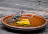 """<div class=""""jaDesc""""> <h4>Immature Male House Finch at Bird Bath - September 9, 2016 </h4> <p>The immature male House Finch ventured onto the wet rock in the middle of the bird bath, but could not quite get up the nerve to step into the water either.</p> </div>"""