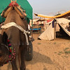 Camel cart around Pushkar