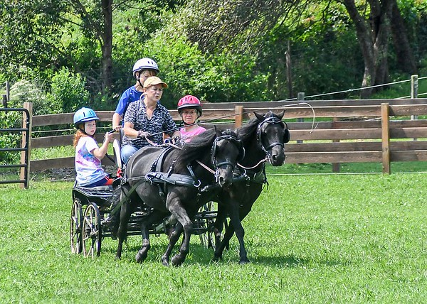 """<div class=""""jaDesc""""> <h4>Carriage Ride - Picking Up the Pace - August 26, 2018</h4> <p>Shadow was really leaning into the turn as the passengers were holding on tight.</p></div>"""