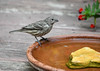 """<div class=""""jaDesc""""> <h4>Immature Female House Finch at Bird Bath - September 9, 2016 </h4> <p>It It was a very hot day and lots of birds were taking baths.  This immature female House Finch wanted to take a bath but could not quite get up the nerve to step into the water.  Later that same day, she took a vigorous bath.</p> </div>"""