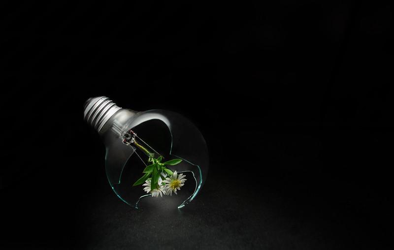 alternative light I