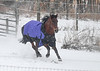 "<div class=""jaDesc""> <h4>Brandy Galloping - January 13, 2018</h4> <p>They would circle back to the back paddock and take turns trying to be the first one back out.  Brandy was in the lead on this run.</p> </div>"