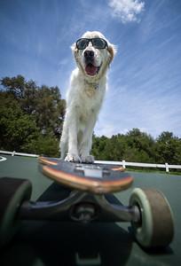 Sk8er Pup