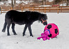 """<div class=""""jaDesc""""> <h4>Shadow Sniffs Ball - February 6, 2018</h4> <p>Shadow was not afraid of the ball or critter.  He was first to investigate what they were.</p></div>"""