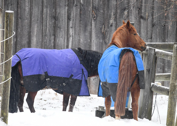 """<div class=""""jaDesc""""> <h4>Drink Break, End of Round One - January 13, 2018</h4> <p>It is a thrill to see 3 horses racing full speed in the snow just having a great time!</p> </div>"""