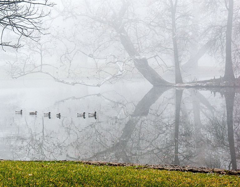 Spring Grove Fog