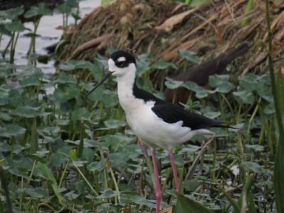 Wachodahatchie Wildlife Preserve 2013