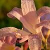 Flowers 1B111106