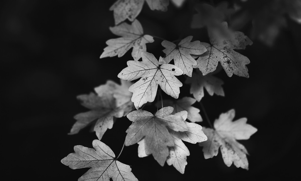 Silver Autumn