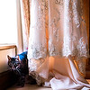 Wedding dress gets cats approval