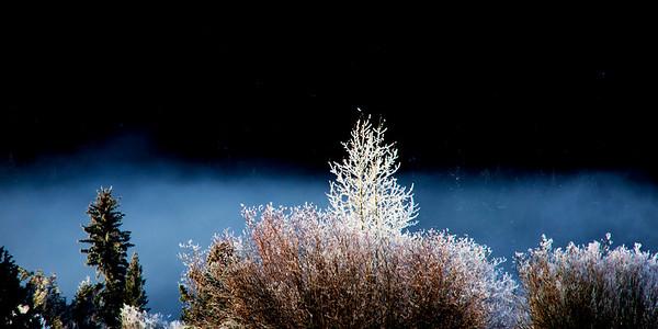 Teton Frost