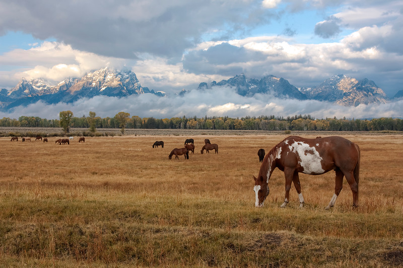 Horse and Tetons _MG_4496