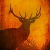 Elk 5863c Art