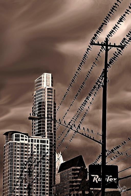 """The Birds"", Austin, TX"