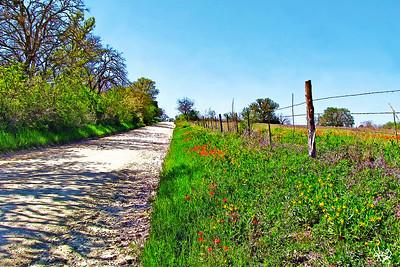 Back Road Near Dale, TX