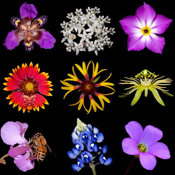 Biodiversity III